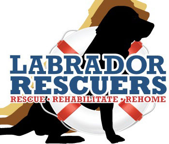 labrador rescuers charity organization
